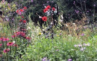 Plants garden border flowers