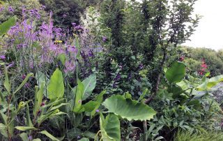 Plants border garden flowers