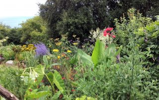 Plants border flowers