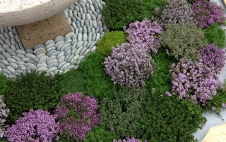 Thyme plants circular water feature
