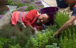 Chelsea Flower Show David Hurrion Jekka McVicar