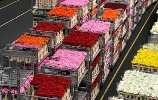 Aalsmeer flower market Holland