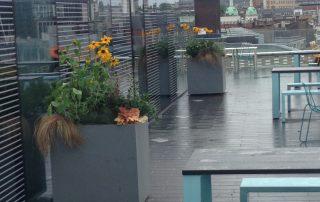 Container roof garden plants