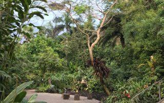 Tropical biome Eden Project tropical plants