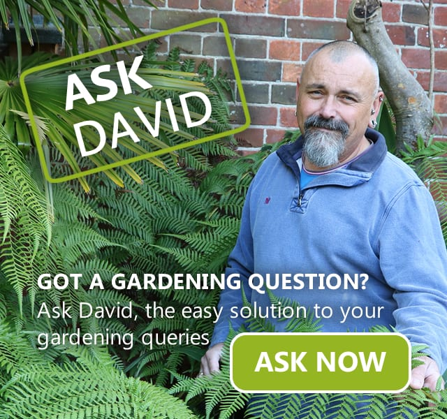 Ask David - The easy solution to your gardening queries