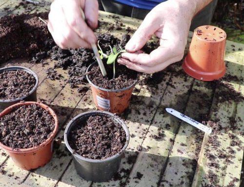 Garden Yourself Healthy in 2021