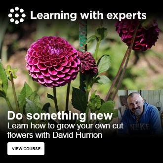 Learn how to grow cut flowers in your garden with David Hurrion