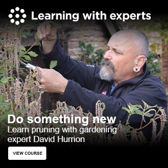 Learn pruning with gardening expert David Hurrion