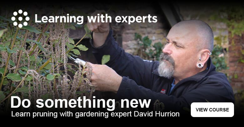Learn how to prune your garden with David Hurrion